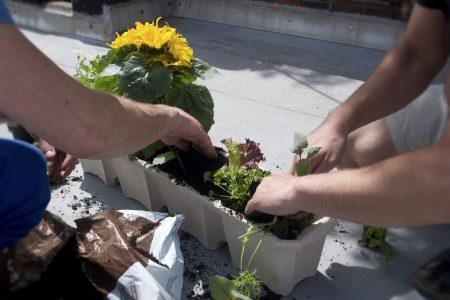 Zelenina pěstovaná na balkóně