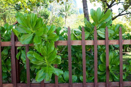 nízky plot