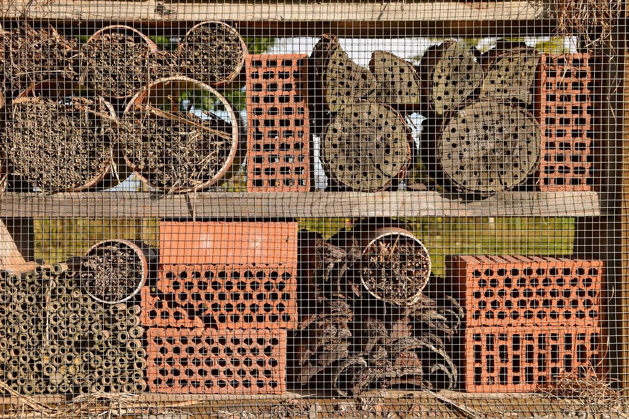 Divoké včely jsou užitečné, i když nedávají med