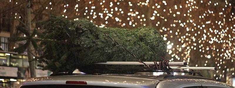 Co děláte s vánočním stromečkem po Vánocích?