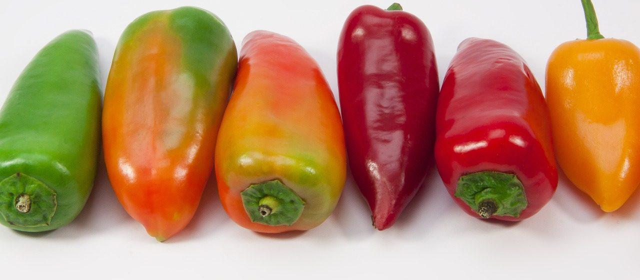 Papriky vyséváme v lednu