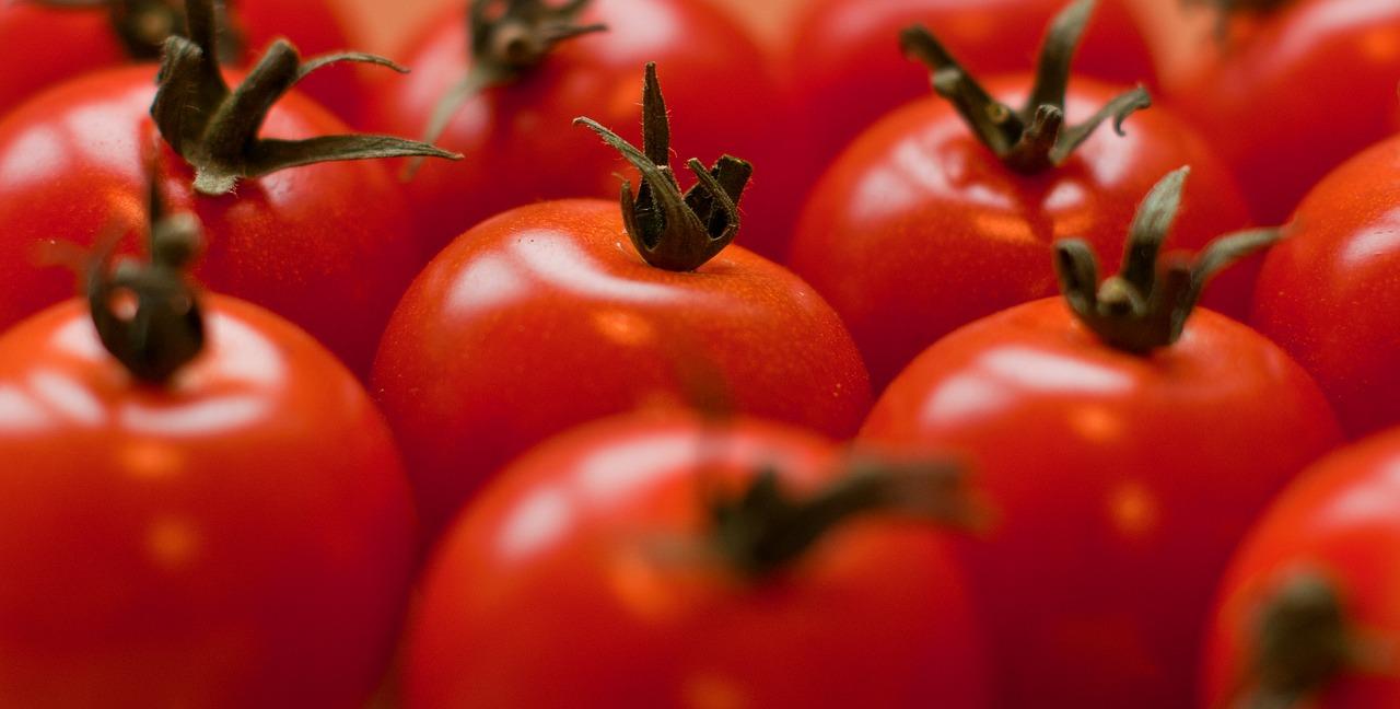 Kdy a jak vyséváme rajčata?